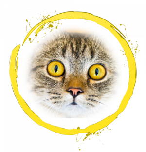 Yellow Ring with cat