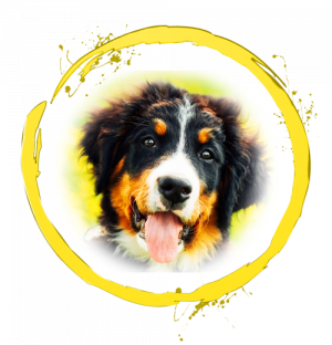Yellow Ring with dog